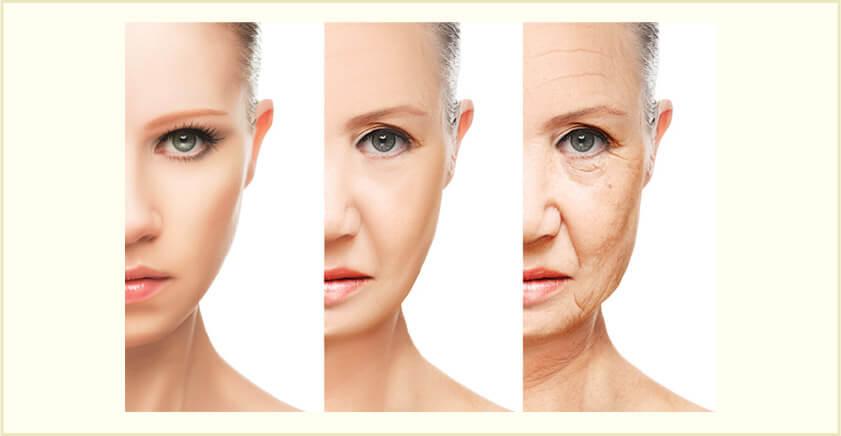 年齢とともに減少する体内ヒアルロン酸量